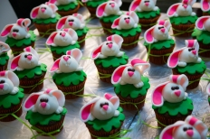 bunny-29258