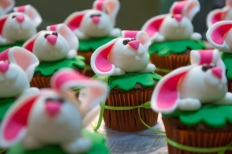 bunny-29266